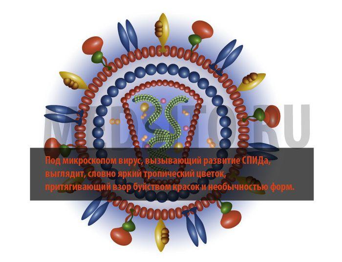 вирус спида под микроскопом