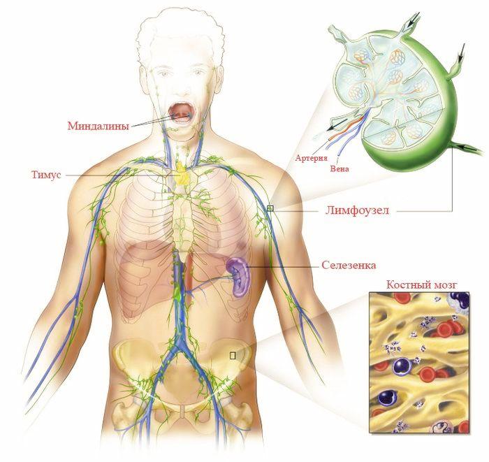 эпидемиология вич инфекции