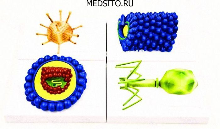 какие клетки поражает вирус вызывающий спид