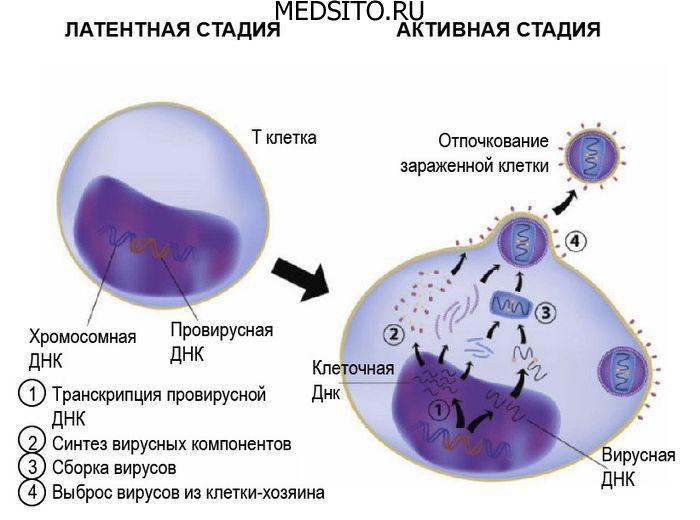 клетки мишени вич