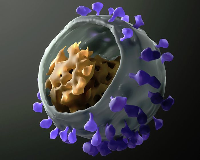 антитела вич