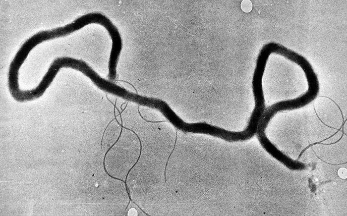 чем сейчас лечат сифилис